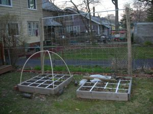 2 raised beds with trellis in the back