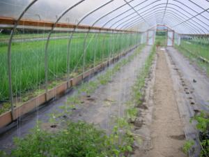 hoop house with plants