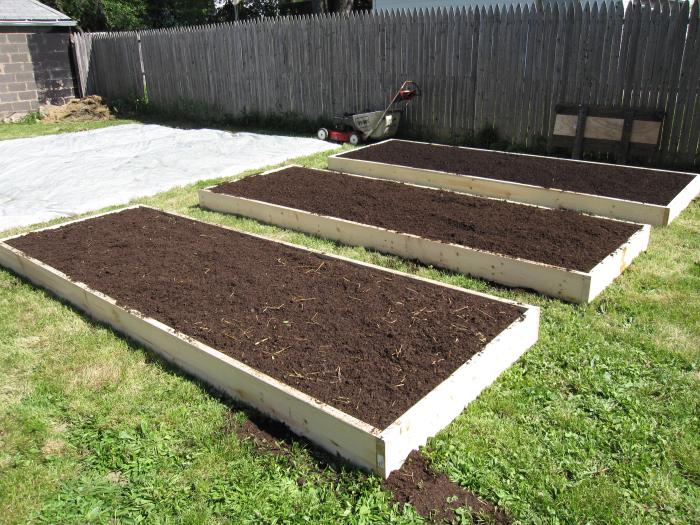 raised beds at the plot