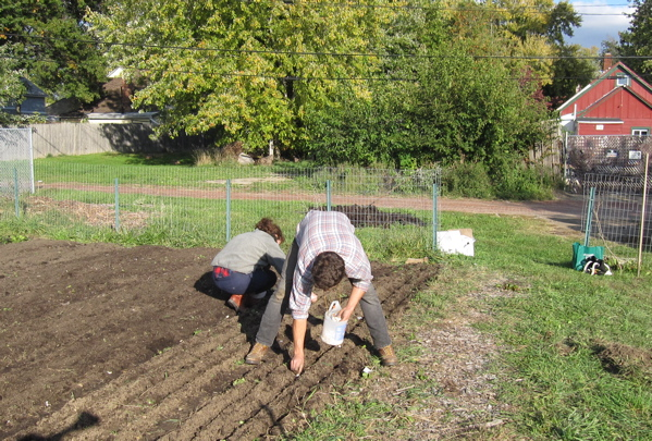 Peter and Virginia planting garlic. They have about 12 beds worth to plant.