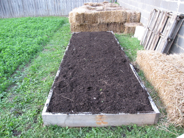 4' x 12' raised bed for garlic
