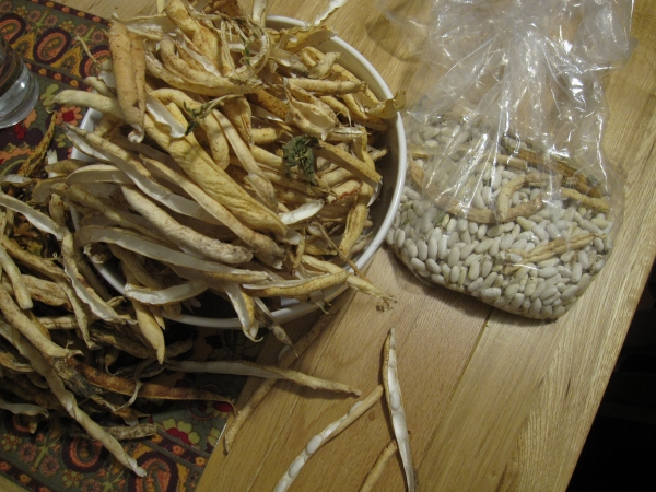 Seed saving. These are Kentucky pole beans that we dried and plan to plant this summer.