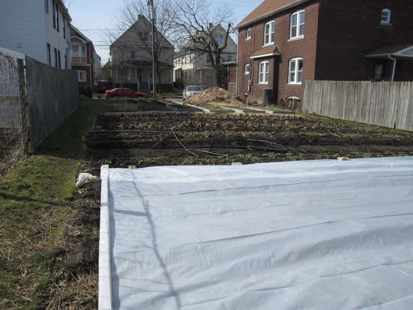 Clear plastic over some of the beds is helping to warm the soil for planting.