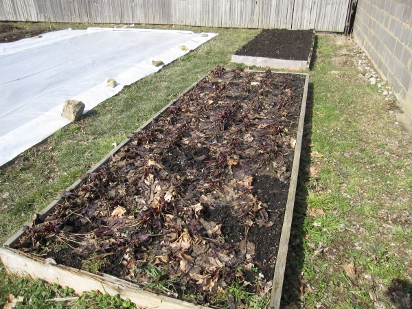Bed of beets that were overwintered, though not sure they made it.