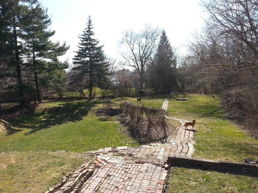 The new backyard
