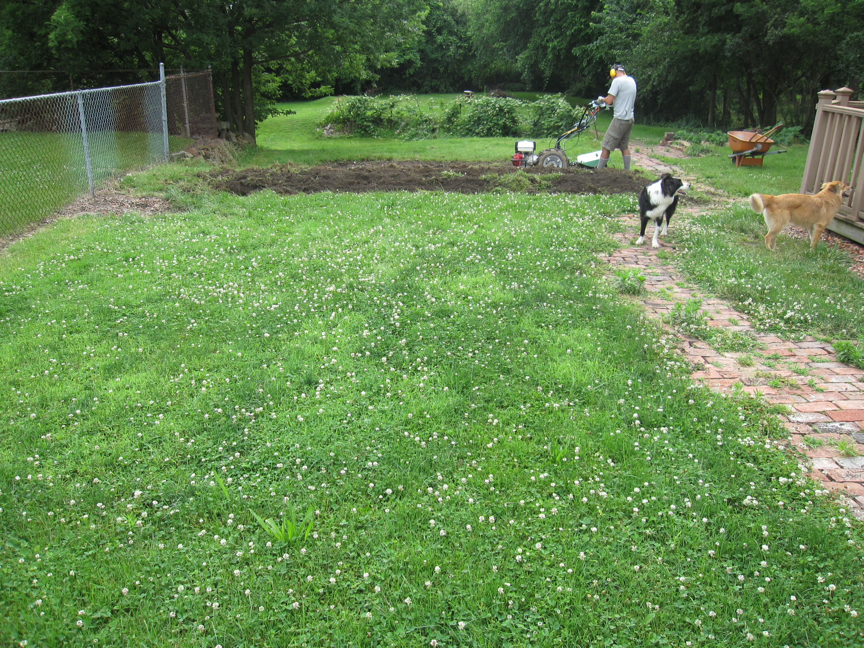 This patch of grass will no longer need mowing!