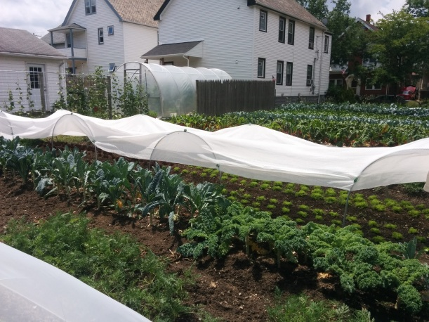 Shade cloth over 2 lettuce beds. View from the back of the plot.